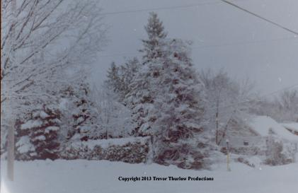 Snow Covered Tree, 35mm negative to digital transfer Copyright 2013 Trevor Thurlow Productions